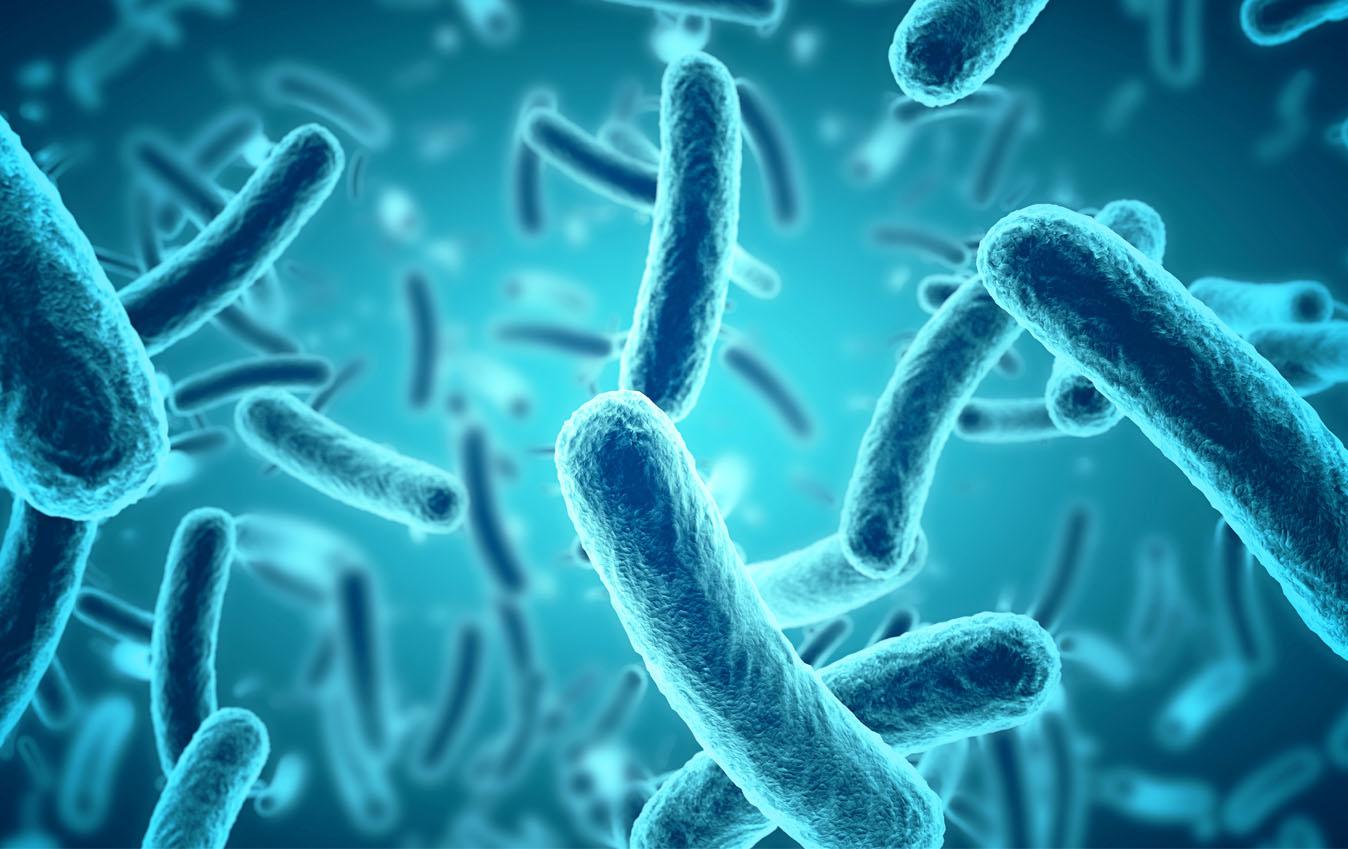 Trendthema Mikrobiom