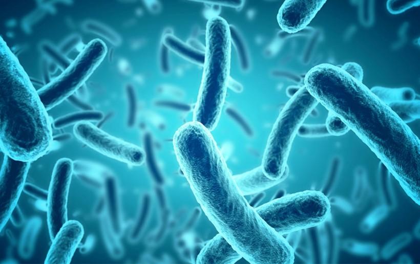 Bakterien-2